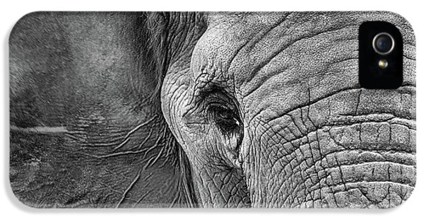 The Elephant In Black And White IPhone 5 Case