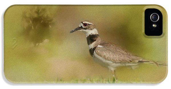 The Elusive Killdeer IPhone 5 Case by Jai Johnson