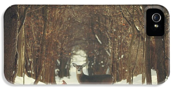 The Forest Of Snow White IPhone 5 Case by Carrie Ann Grippo-Pike