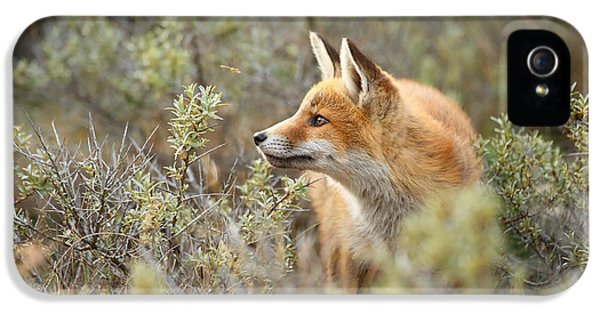The Fox And Its Prey IPhone 5 Case