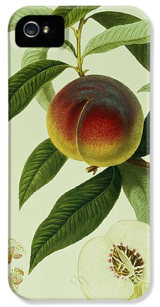 The Galande Peach IPhone 5 Case