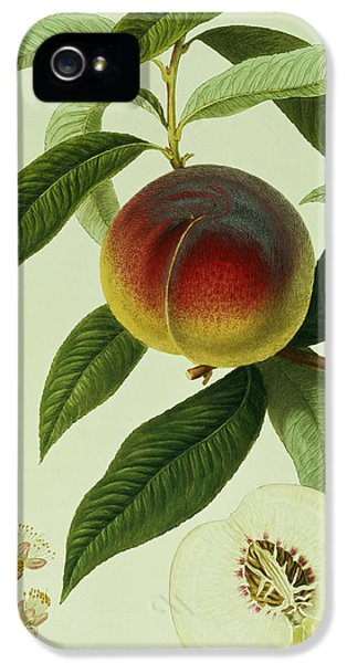 The Galande Peach IPhone 5 Case by William Hooker