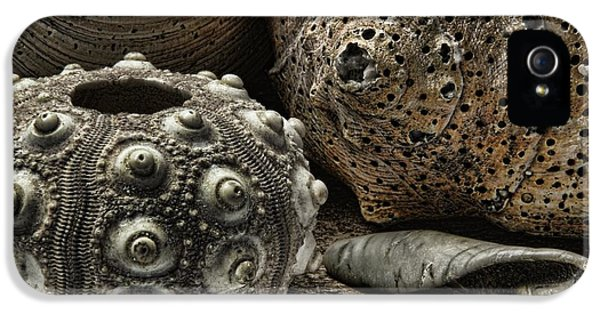 The Gathering IPhone 5 Case by Richard Rizzo