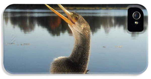 The Great Golden Crested Anhinga IPhone 5 Case by David Lee Thompson