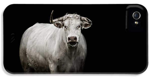 Bull iPhone 5 Case - The Guardian by Paul Neville