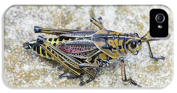 The Hopper Grasshopper Art IPhone 5 Case by Reid Callaway