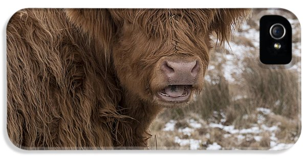 The Laughing Cow, Scottish Version IPhone 5 Case by Jeremy Lavender Photography
