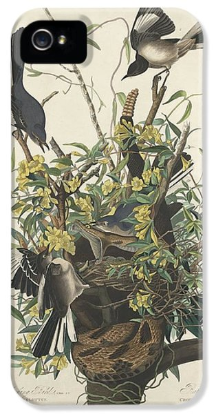 Mockingbird iPhone 5 Case - The Mockingbird by Dreyer Wildlife Print Collections