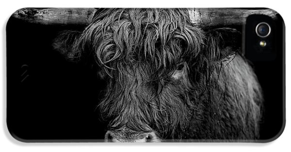 Bull iPhone 5 Case - The Monarch by Paul Neville