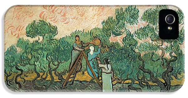 Rural Scenes iPhone 5 Case - The Olive Pickers by Vincent van Gogh