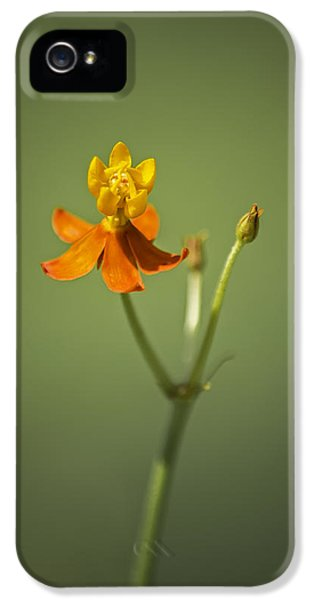 The One - Asclepias Curassavica - Butterfly Milkweed IPhone 5 Case by Johan Hakansson