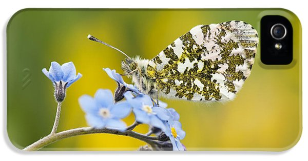 The Orange Tip Butterfly IPhone 5 Case
