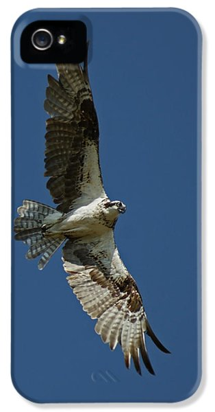 The Osprey IPhone 5 Case by Ernie Echols