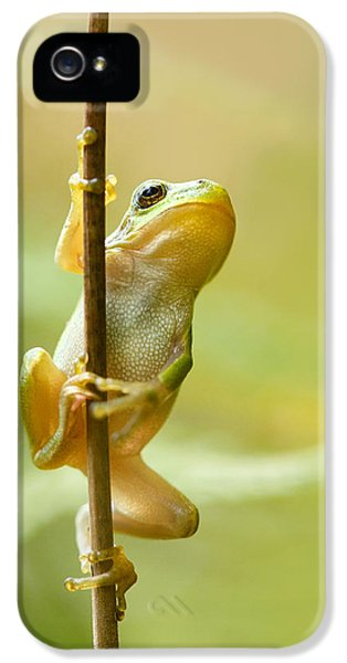 Amphibians iPhone 5 Case - The Pole Dancer - Climbing Tree Frog  by Roeselien Raimond