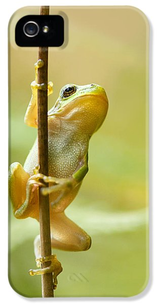The Pole Dancer - Climbing Tree Frog  IPhone 5 Case by Roeselien Raimond