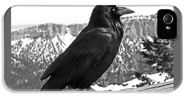 The Raven - Black And White IPhone 5 Case