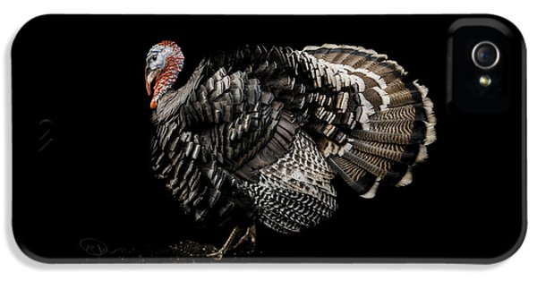 Turkey iPhone 5 Case - The Showman by Paul Neville