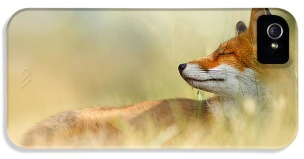 The Sleeping Beauty - Wild Red Fox IPhone 5 Case