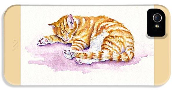 Cat iPhone 5 Case - The Sleepy Kitten by Debra Hall