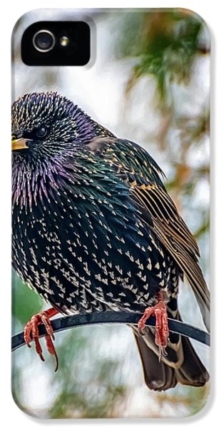 Starlings iPhone 5 Case - The Starling by Adrian Evans