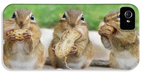 Squirrel iPhone 5 Case - The Three Stooges by Lori Deiter
