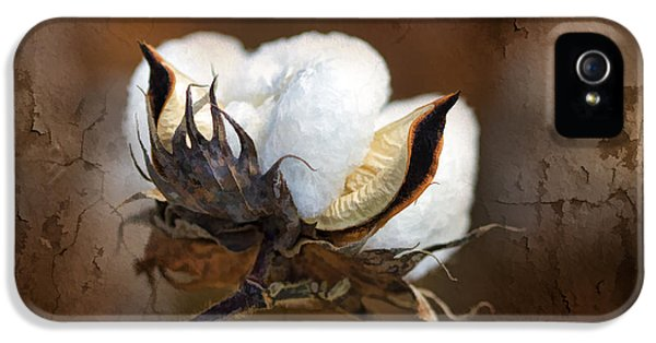 Them Cotton Bolls IPhone 5 Case by Kathy Clark
