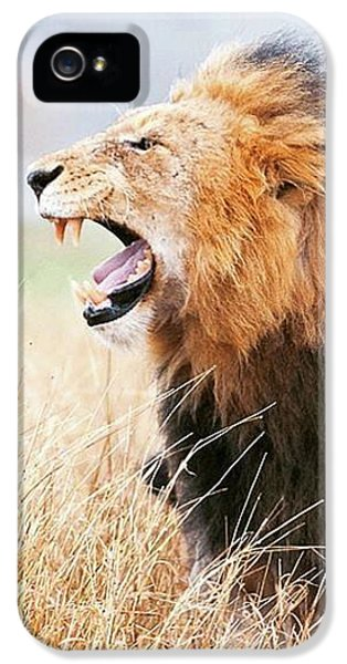 This Is Power IPhone 5 Case by Happy Home Artistry