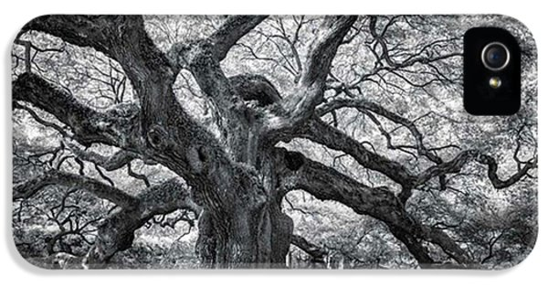iPhone 5 Case - This Tree Is Located In Charleston by Jon Glaser