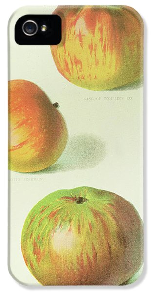 Three Apples IPhone 5 Case
