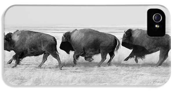 Three Buffalo In Black And White IPhone 5 Case