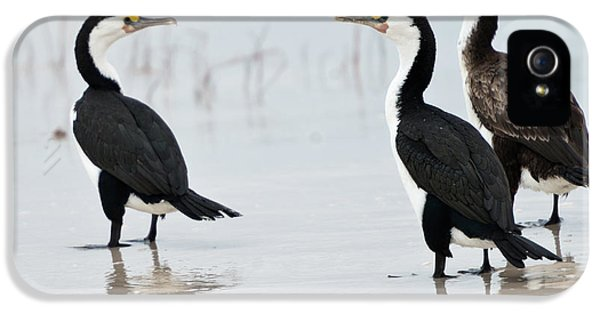 IPhone 5 Case featuring the photograph Three Cormorants by Werner Padarin