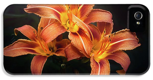 Lily iPhone 5 Case - Three Lilies by Scott Norris