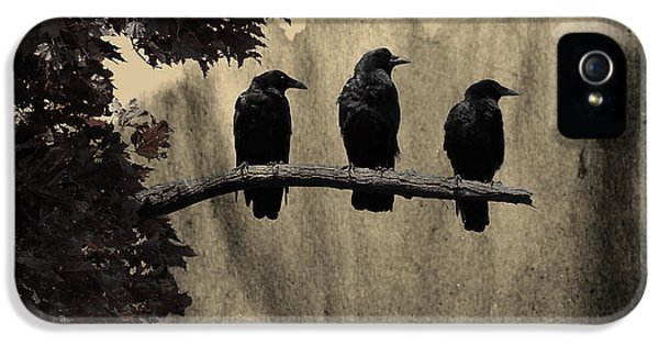 Starlings iPhone 5 Case - Three Ravens Branch Out by Gothicrow Images