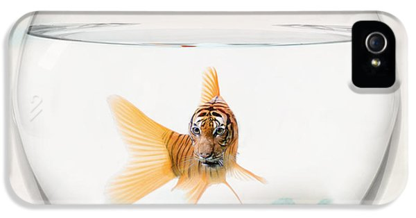 Tiger Fish IPhone 5 Case by Juli Scalzi