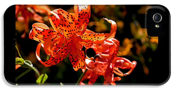 Tiger Lilies IPhone 5 Case