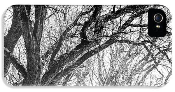 Timber Tentacles IPhone 5 Case by Az Jackson