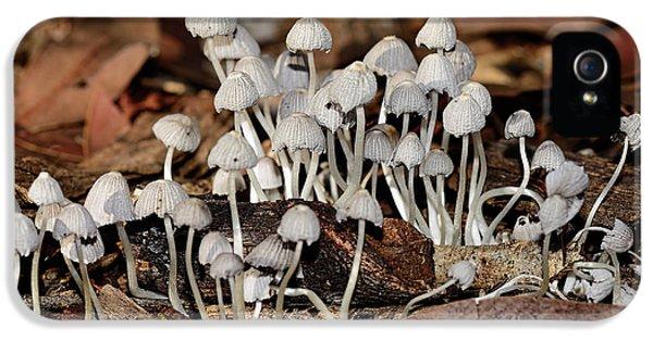 Tiny Corrugated Fungi By Kaye Menner IPhone 5 Case by Kaye Menner