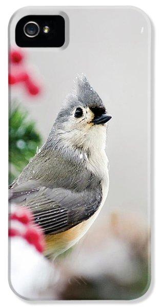 Titmouse Bird Portrait IPhone 5 Case by Christina Rollo