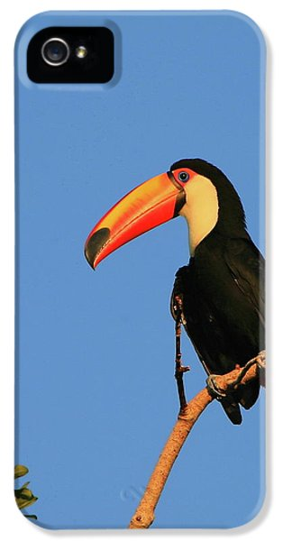 Toco Toucan IPhone 5 Case by Bruce J Robinson