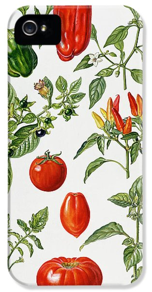 Tomatoes And Related Vegetables IPhone 5 / 5s Case by Elizabeth Rice