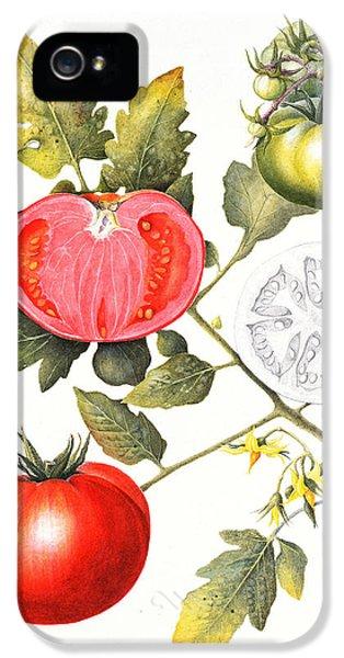 Tomatoes IPhone 5 Case by Margaret Ann Eden