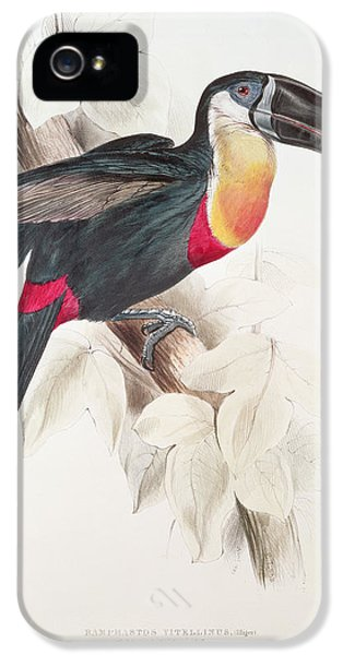 Toucan iPhone 5 Case - Toucan by Edward Lear
