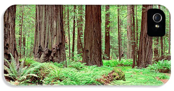 Trail, Avenue Of The Giants, Founders IPhone 5 Case by Panoramic Images