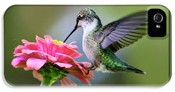 Tranquil Joy Hummingbird Square IPhone 5 Case by Christina Rollo