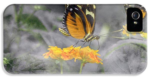 Tranquility Garden IPhone 5 Case