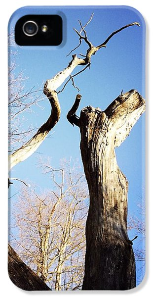 Sky iPhone 5 Case - Tree by Matthias Hauser