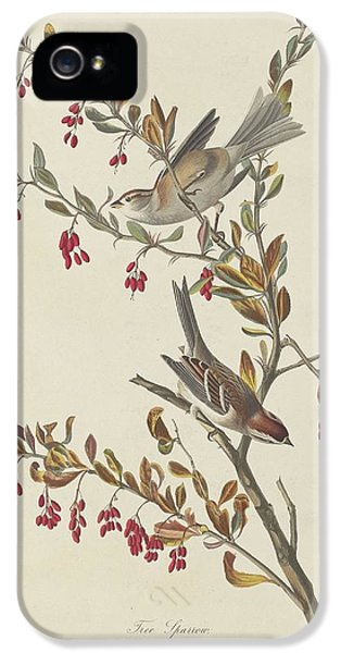 Tree Sparrow IPhone 5 Case by Rob Dreyer