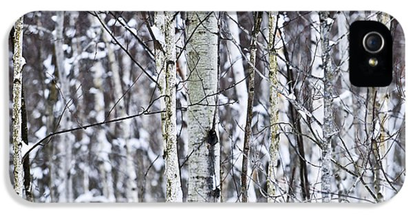 Tree Trunks Covered With Snow In Winter IPhone 5 Case by Elena Elisseeva