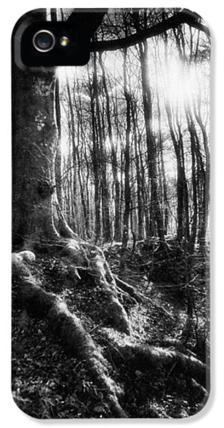 Trees At The Entrance To The Valley Of No Return IPhone 5 Case