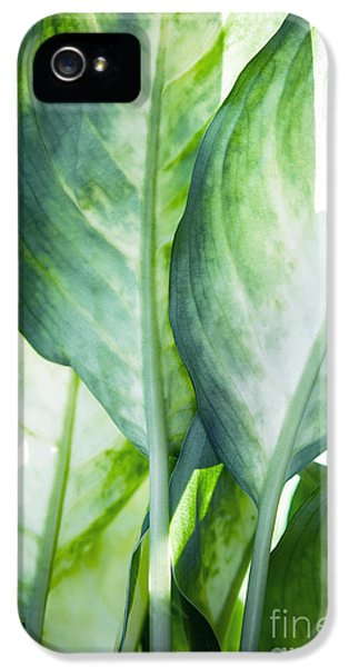 Tropic Abstract  IPhone 5 Case